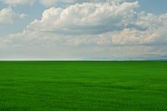 Groen grasgebied met bewolkte blauwe hemel Royalty-vrije Stock Afbeeldingen