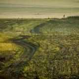 Groen grasgebied met de één mens stock fotografie