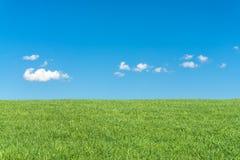 Groen grasgebied met duidelijke blauwe hemel en witte wolken Stock Fotografie