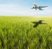 Groen grasgebied met heldere blauwe hemel Royalty-vrije Stock Foto's