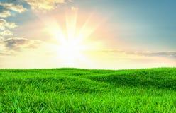 Groen grasgebied op kleine heuvels Royalty-vrije Stock Afbeeldingen