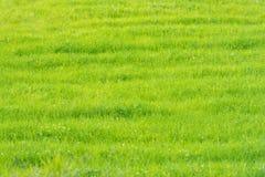 Groen grasgebied in Scandinavië, Noorwegen Stock Afbeelding