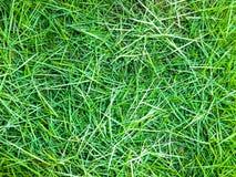 Groen graspatroon als achtergrond Royalty-vrije Stock Foto