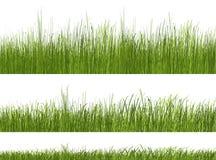 Groen graspatroon op witte achtergrond Royalty-vrije Stock Afbeelding