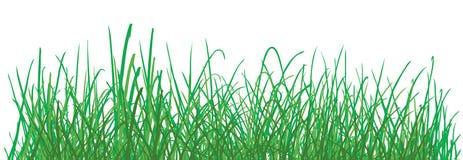 Groen graspatroon op witte achtergrond. vector Stock Fotografie