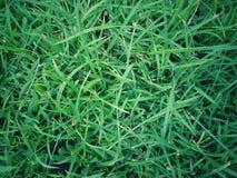 Groen graspatroon voor natuurlijke achtergrond Stock Foto