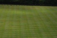 Groen grasrijk gazon Stock Afbeeldingen