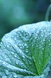 Groen groeien - E stock afbeeldingen