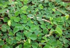 Groen-groen-gras Stock Foto's
