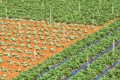 Groen groentengebied dichtbij Lang Biang-berg, de stad van DA Lat, Lam Dong-provincie, Vietnam Royalty-vrije Stock Foto