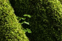 Groen groot mos rond boomwortels Royalty-vrije Stock Fotografie