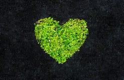 Groen hart Stock Afbeeldingen