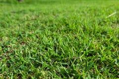 Groen heerlijk gras Royalty-vrije Stock Foto