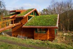 Groen het leven dak bij de houten die bouw met vegetatie wordt behandeld stock foto