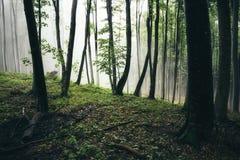 Groen hout met mist na regen stock afbeelding