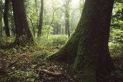 Groen hout met mos op bomen royalty-vrije stock foto