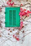 Groen houten venster en rode bladeren in de herfst Royalty-vrije Stock Fotografie
