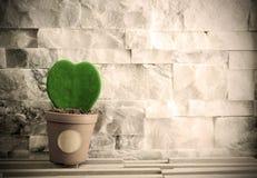 Groen hoya blad met uitstekende stijlachtergrond Stock Foto