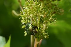Groen insect stock foto