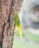 Groen insect op een boom royalty-vrije stock afbeelding