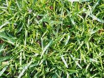 Groen jong eerste gras in de lente Mening van hierboven stock foto