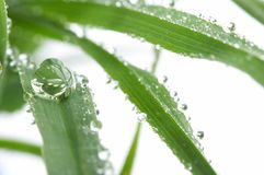 Groen jong gras met dalingen van ochtenddauw Royalty-vrije Stock Fotografie