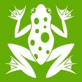 Groen kikkerpictogram stock illustratie