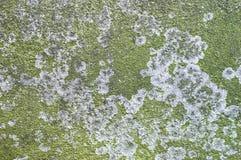 Groen korstmos op concrete plak. royalty-vrije stock foto