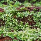 Groen korstmos op rood hout Royalty-vrije Stock Afbeeldingen