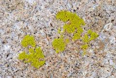 Groen korstmos op rots stock afbeelding