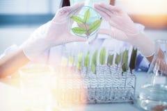 Groen kruiden de ontdekkingsvaccin van het geneeskundeonderzoek bij wetenschapslaboratorium Royalty-vrije Stock Foto