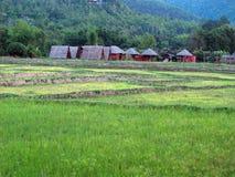 Groen land, bruine hutten stock foto