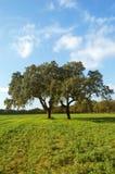 Groen landbouwbedrijf Stock Foto