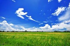 Groen landbouwbedrijf en blauwe hemel Stock Fotografie