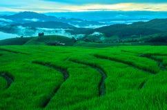 Groen landbouwbedrijf van aard Royalty-vrije Stock Foto's
