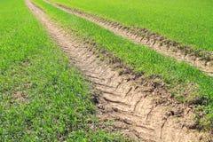 Groen landbouwbedrijfgebied Royalty-vrije Stock Foto
