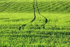 Groen landbouwgebied Stock Foto