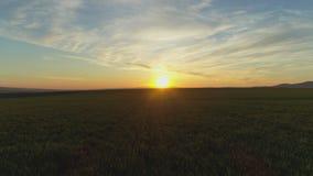 Groen landbouwgebied en blauwe zonsonderganghemel stock video
