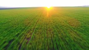 Groen landbouwgebied en blauwe zonsonderganghemel stock videobeelden