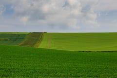 Groen landschap Stock Fotografie