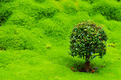 Groen landschap stock foto's