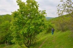 Groen landschap, fotograaf op afstand Royalty-vrije Stock Foto