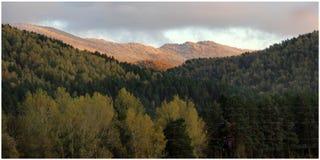 Groen landschap met heuvels, bomen en bos stock foto's