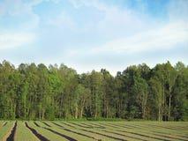 Groen landschap onder de heldere hemel Stock Afbeeldingen