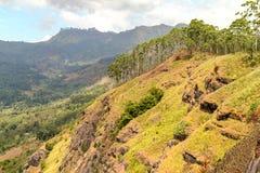 Groen landschap in Sri Lanka royalty-vrije stock afbeelding