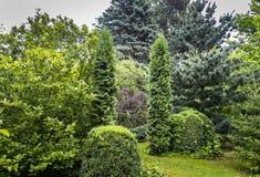 Groen landschap van de tuin: Magnolia Susan, Thuja-occidentalis Columna, bukshout Buxus sempervirens, Picea pungens stock afbeelding
