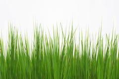 Groen lang die gras op witte achtergrond wordt geïsoleerd stock foto's