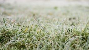 Groen langzaam verdwenen gras met vorst in de vroege de winterochtend royalty-vrije stock afbeelding
