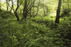 Groen milieu in de zomerbos royalty-vrije stock fotografie