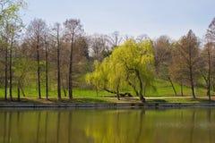 Groen milieu in een park, Boekarest Stock Foto